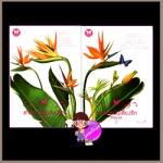สายการบินเสี่ยงรัก เล่ม 1-2 Lovelock Airline Shayna อินเลิฟ